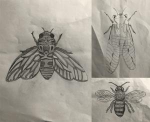 Summer bugs 2
